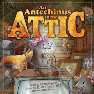 Youth Radio - Antechinus in the Attic Special pt1