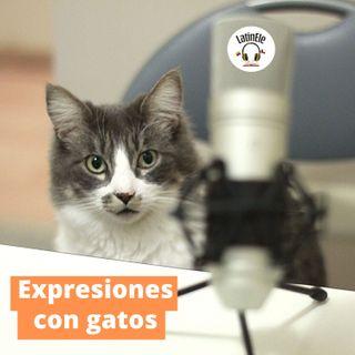 Expresiones con gatos en español 😼
