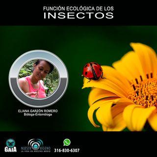 NUESTRO OXÍGENO función ecológica de los insectos - Blga. Eliana Garzon