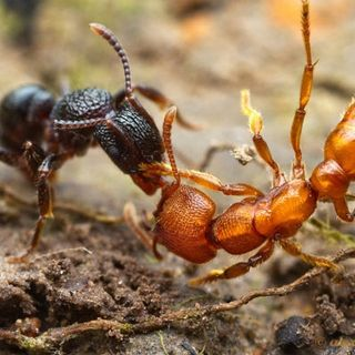 Ants and Alien