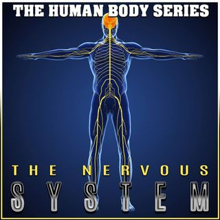 The Nervous System (The Human Body Series)