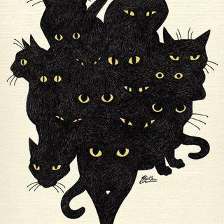 Black Cats Sunday