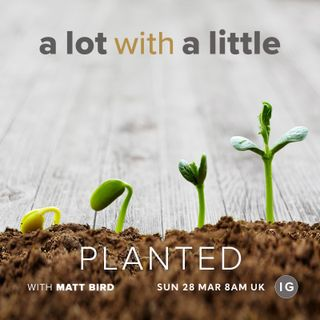 A Lot With A Little #13: PLANTED - plant yourself where you can bud, blossom and grow.