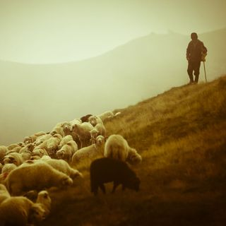 How to Make the Lord Your Shepherd (Gospel Light Minute X #364)