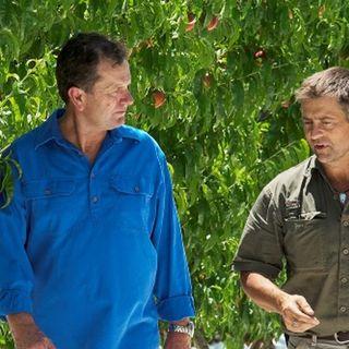 Fruit-growing Riverland MP Tim Whetstone (@TimWhetstoneMP) talks about SA's fruit fly outbreak