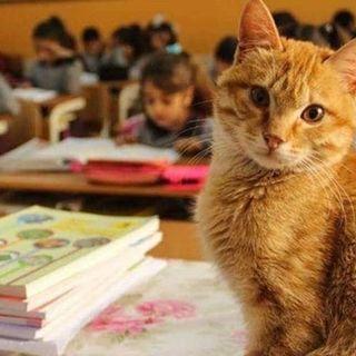 #srn Un gatto a scuola con la neve
