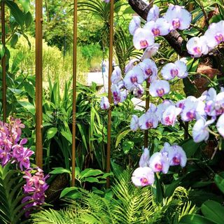 sexual imprisonment in orchids
