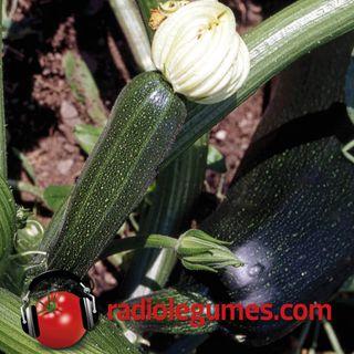 Courgettes, pâtissons, etc. : la belle saison dans votre assiette
