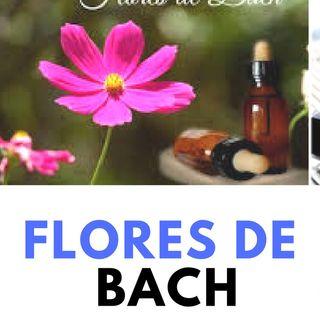 Terapia Floral Bach