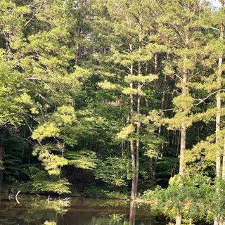 Guided Meditation - 10 minute nature meditation