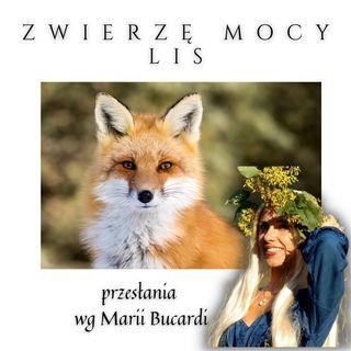 Zwierzę Mocy - Lis - odkryj jego tajemnice | Maria Bucardi