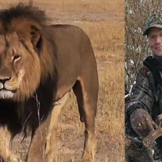 The Death of Cecil the Lion, and his killers