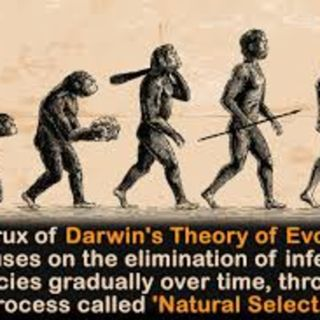 Is the Theory of Evolution true?