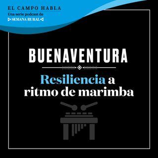 Buenaventura: Resiliencia a ritmo de marimba