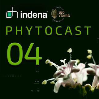 Phytocast 04: La guerra