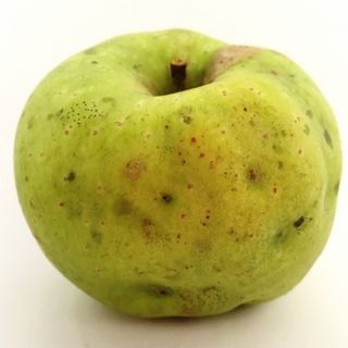 Trivia Tuesday: Apples to Apples