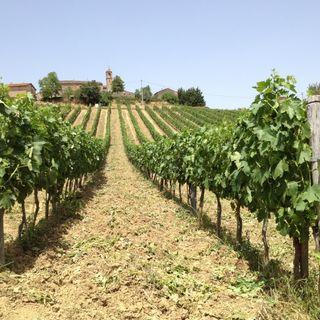 Borgo Campello - 29 agosto