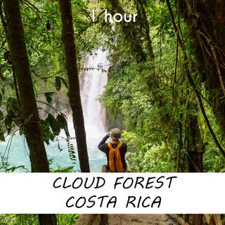 Cloud Forest Costa Rica | 1 hour FOREST Sound Podcast | White Noise | ASMR sounds for deep Sleep | Relax | Meditation | Colicky