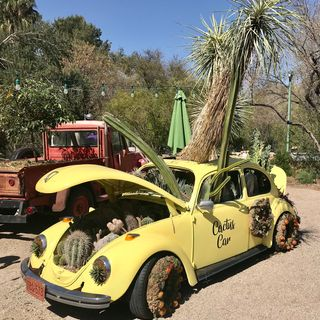 Tucson Botanical Gardens - Matt Adamson and Linda Kissam on Big Blend Radio