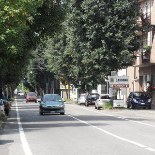 La storia degli alberi di Saronno