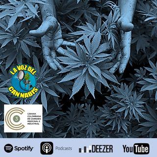 Capítulo 33: Industria del Cannabis en Colombia