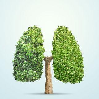 Día Mundial del Medio Ambiente!