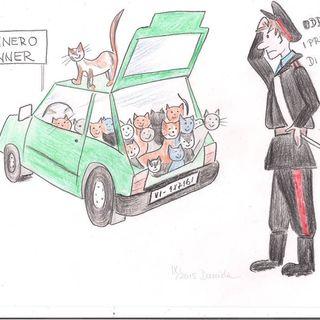 Legge Canina