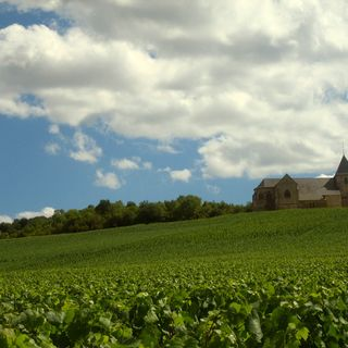 Ep 250: Amazing Innovation in Champagne with Thibaut Le Mailloux of the Champagne Council
