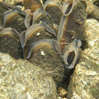 Ocean Lovin 2020 - Freshwater Mussels