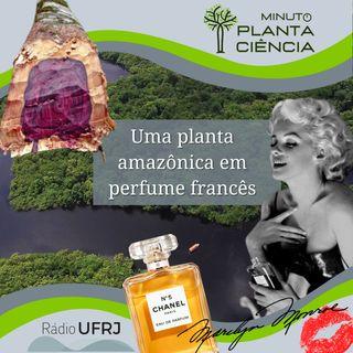 Minuto PlantaCiência - Ep. 13 - Uma planta amazônica em perfume francês (Rádio UFRJ)