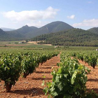 Ep 326: The Best Spanish Wines You've Never Heard of -- Jumilla and Yecla