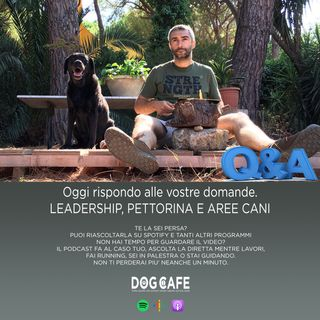 #059 - Q&Q leadership, pettorina e aree cani