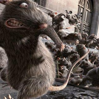 #roma Roba da Ratti!!