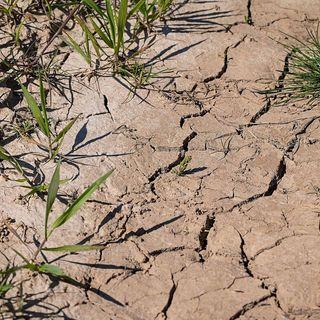 Die große Dürre im Jahr 1540