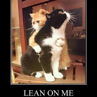 The Kitten Kong Show: Lean On Me.