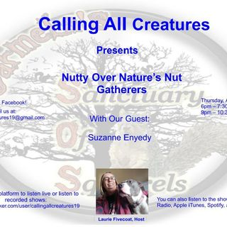 Nutty Over Nature's Nut Gatherers