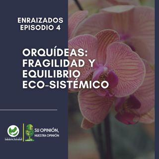 Orquídeas. Fragilidad y equilibrio eco-sistémico