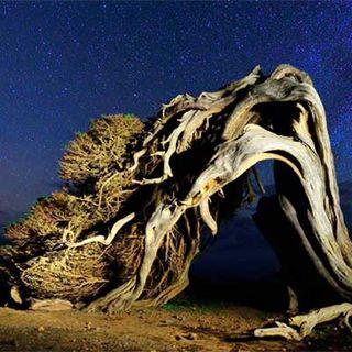 """12.- Especial: """"De fotos en la isla de El Hierro"""""""