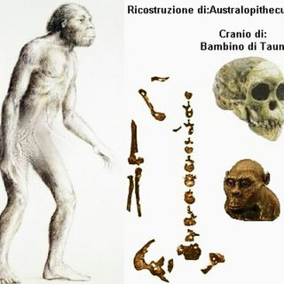 (english) Is the evolution of Australopithecus Africanus in reality an anomalous 'involutive deviation' from Regnum Animalis?