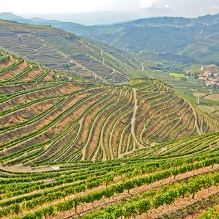 Ep 247: Dry Wines of Douro, Portugal