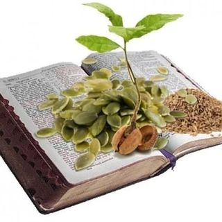Herbs of The Bible Part I