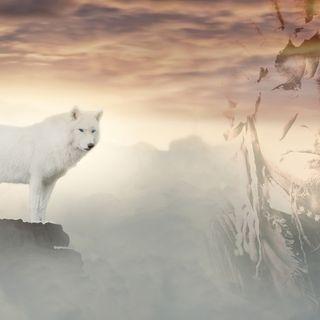 Il lupo bianco e il lupo nero