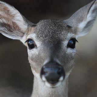 In Thailandia un cervo è stato trovato morto con sette chili di plastica nello stomaco