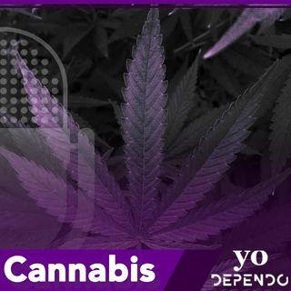 Cannabis: CBD y THC