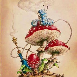 Il Fungo Magico -  Tom Robbins