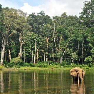 Dopo l'Amazzonia, a rischio le foreste tropicali africane