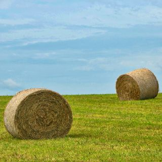 Peter Collins, senior economist from @ABARES on Australia's winter crop projections - and what's happening on hay