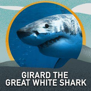 Girard the Great White Shark