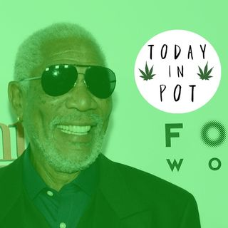 M. Freeman love Marijuana - Web Resource