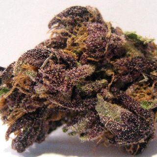 Purple Candy Kush - Budsandbeyond